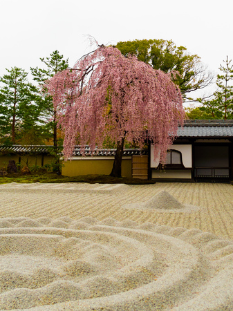 Beautiful cherry blossom tree inside of a garden with a white sand in the Higashiyama district in the spring time in Kyoto