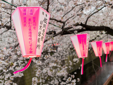 HAKONE, JAPAN - JULY 02, 2017: Japanesse letters in a pink and white lanterns with a beautiful view cherry blossoms behind in Sakura in majestic Kiyomizu-dera, a famous Buddhist Temple in Kyoto