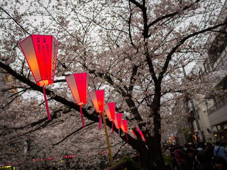 HAKONE, JAPAN - JULY 02, 2017: Japanesse letters in a red lantern with a beautiful view cherry blossoms behind in Sakura in majestic Kiyomizu-dera, a famous Buddhist Temple in Kyoto Editorial