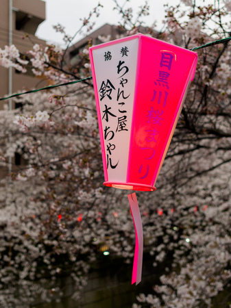 HAKONE, JAPAN - JULY 02, 2017: Japanesse letters in a pink and white lantern with a beautiful view cherry blossoms behind in Sakura in majestic Kiyomizu-dera, a famous Buddhist Temple in Kyoto