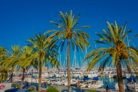 palma: PALMA DE MALLORCA, SPAIN - AUGUST 18 2017: Beautiful harbor view with white yachts and some palm trees, in Palma de Mallorca, Balearic islands, Spain Editorial