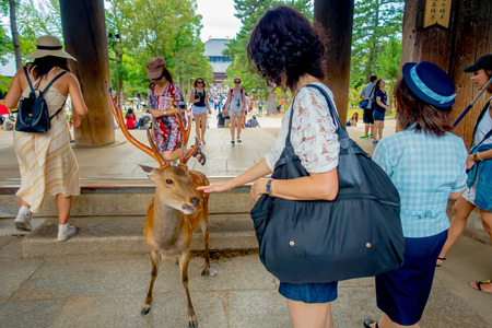 capita: Nara, Japan - July 26, 2017: Unidentified people feeding a wild deer in Nara, Japan. Nara is a major tourism destination in Japan - former capita city and currently UNESCO World Heritage Site Editorial