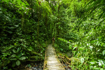 MINDO, ECUADOR - AUGUST 27, 2017: Beautiful wooden bridge in hill rain forest with moisture plant, located in Mindo Editorial