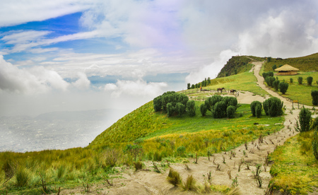 Panoramic view at the Pichincha volcano, with some native andes plants and horses with a typical hut in the horizont, in the top of Pichincha mountain in Quito, Ecuador