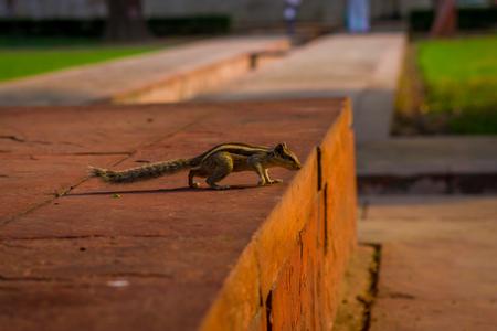 DELHI, INDIA - SEPTEMBER 25 2017: Beautiful little squirrel walking in Sawan or Bhadon Pavilion in Hayat Baksh Bagh of Red Fort at Delhi