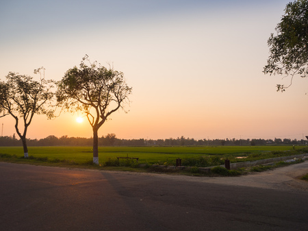 Beautiful sunset over a rice fields, with a tree next to a road in hoian city in Vietnam