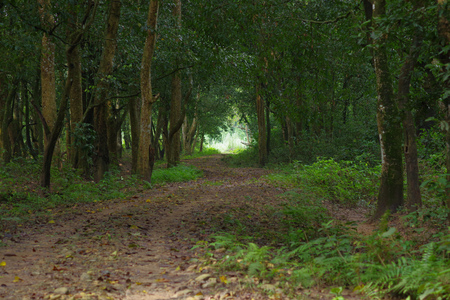 Beautiful view of a clay path inside of the forest in Chitwan National Park, mainly covered by jungle 版權商用圖片