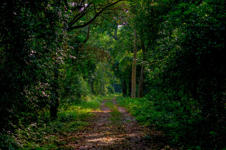 Beautiful view of a clay path inside of the forest in Chitwan National Park, mainly covered by jungle 스톡 콘텐츠 - 92918674