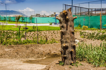 Beautiful outdoor view of wooden trunk in the park of new boulevar with a Bikeway behind, in Amazonas avenue, in the city of Quito