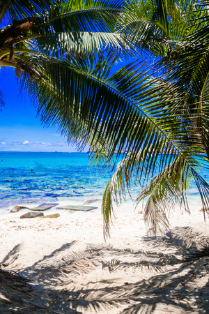 Palm trees in Johnny Cay, Island of San Andres, Colombia in a beautiful beach background