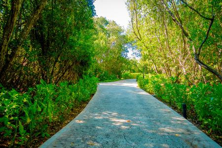 Beautiful stone path surrounding of vegetation in Playacar neighborhood, Playa del Carmen, Mexico Stock Photo