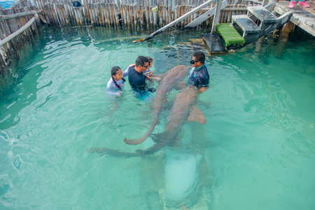 CANCUN, MEXICO - JANUARY 10, 2018: Beautiful outdoor view of unidentified tourists with a trainer touching a shark during demostration in the Isla Mujeres inside of a wooden wall in the water during a gorgeous sunny day and turquoise water in Mexico