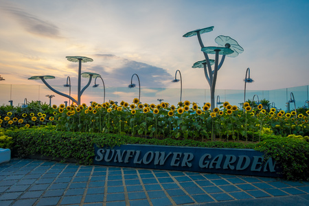SINGAPORE, SINGAPORE - JANUARY 30, 2018: Outdoor view of the Sunflower Garden inside of the Singapore Changi Airport, during the sunset
