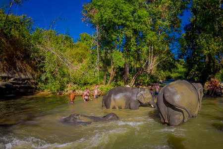 CHIANG RAI, THAILAND - FEBRUARY 01, 2018: Beautiful outdoor view of group of elephants happy playing in the water at Elephant jungle sanctuary. with some tourist around in Chiang mai