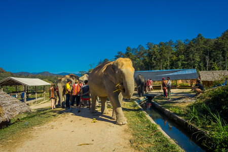 CHIANG RAI, THAILAND - FEBRUARY 01, 2018: Outdoor view of unidentified people looking a huge elephant in Jungle Sanctuary in Chiang Mai Editorial