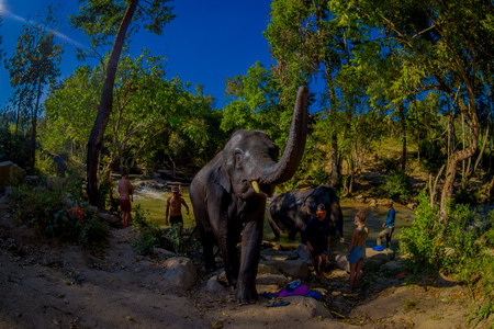 CHIANG RAI, THAILAND - FEBRUARY 01, 2018: A group of tourists close to a huge elephants at Elephant jungle sanctuary. They get help from a local elephant trainer