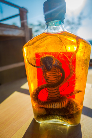 Close up of cobra inside of Whiskey prepared by locals on an island off the coast of Laos, at the Golden Triangle Special Economic atChinatown, these brews contain live cobra 版權商用圖片
