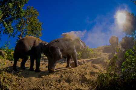 Beautiful outdoor view of young elephants walking near the riverbank in the nature, in Elephant jungle Sanctuary, during a gorgeous sunny day with a blue sky in Chiang Thailand Stock Photo
