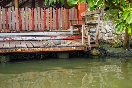 Outdoor view of reptile resting in a porche of a floating house on Bangkok