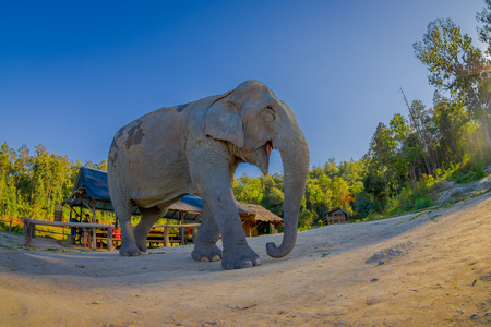 Below view of young elephant walk near the riverbank in the nature, in Elephant jungle Sanctuary, in Chiang Thailand