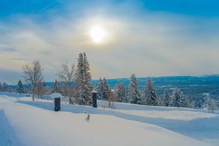 Outdoor beautiful landscape with pine trees covered with snow in the forest during winter