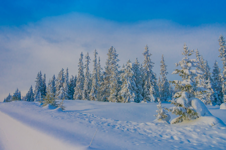 Beautiful outdoor view during winter in Bagnsasen region with trees covered with snow in the forest in Norway Stock Photo