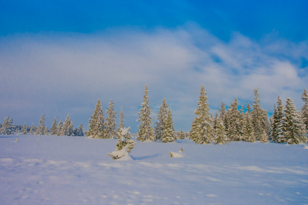 Beautiful outdoor view with trees covered with snow in the forest, during winter in Bagnsasen region in Norway
