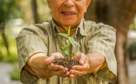 Close up of man using two hands holding and caring a young green plant, planting tree, growing a tree, love nature, save the world