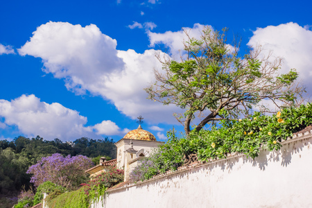 Outdoor view of plants inside of a stoned fence with a old buildings in Antigua Guatemala