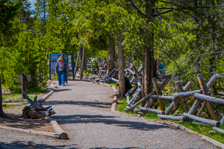 YELLOWSTONE, MONTANA, USA JUNE 02, 2018: Unidentified people walking in a wooden path among the geysers and trees. Back Basin of Norris Geyser Basin. Yellowstone National Park, Wyoming
