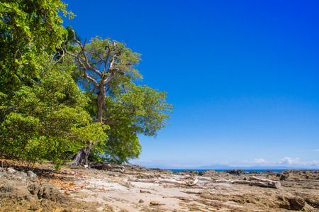 Beautiful landscape of rocky beach and trees in Playa Montezuma in gorgeous blue sky and sunny day