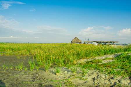 Outdoor view of hut structure made of straw in the coast of the beach in Cojimies Ecuador. Stock Photo