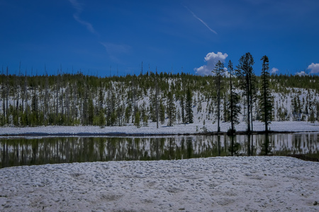 Outdoor view of frozen forest, pine tree partial covered with snow and river flowing in Yellowstone National Park, in gorgeous sunny day, in Usa.