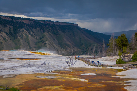 Sideways view of Canary Spring and terraces in the Mammoth Hot Spring area of Yellowstone National Park in USA.