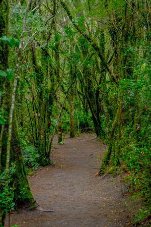 Beautiful natural path inside of the vegetation located in the forest around Saltos de Petrohue, Chile.