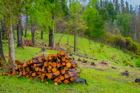 Outdoor view of of firewood pile in the forest of Pucon in Chile Stock Photo