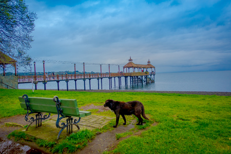 Beautiful outdoor view of a dog close to a metallic chair with a pier of Llanquihue lake behind in Frutillar Bajo, Chile Stock Photo