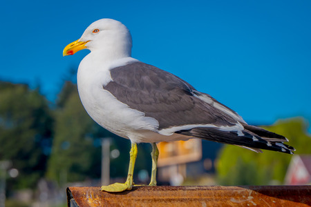 Close up of selective focus of single seagull at a beach in Chiloe National Park, Chile. Stock Photo