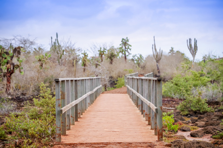 Outdoor view of wooden path on Isabela Island. Galapagos Islands Stok Fotoğraf