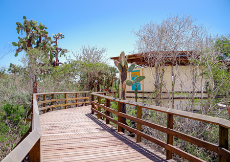 Beautiful wooden path on Isabela Island located in Galapagos Islands