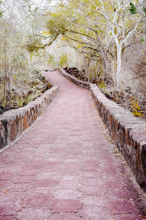 Outdoor view of brick pathway leading through the forest to the ocean, on Galapagos Island Santa Cruz Stock Photo