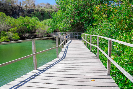 Panorama of wooden path way across the mangrove on Isabela Island, Galapagos Islands