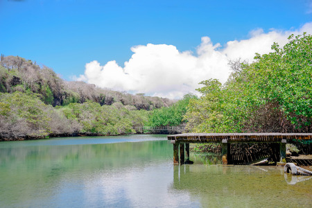 View of wooden path close to lagoon located in the manrgove on San Cristobal Island, Galapagos Islands