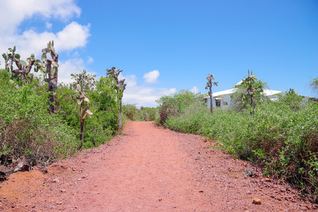 Outdoor view of typical vegetation of Galapagos Island with a sand path for visit the Charles Darwin Research station