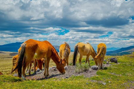 Cotopaxi National Park in Ecuador, in a summer morning Stock Photo
