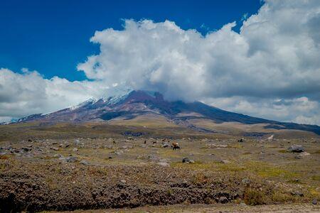 Cotopaxi National Park in Ecuador, in a summer morning 版權商用圖片