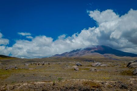 Cotopaxi National Park in Ecuador, in a summer morning