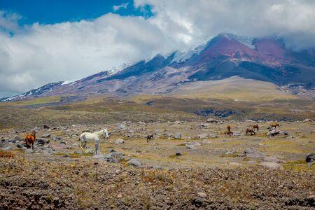 Cotopaxi National Park in Ecuador, in a summer morning. 版權商用圖片
