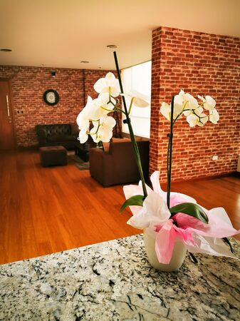 Steampunk rustic walls, vintage interior. With orchid plant