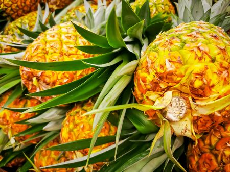 Pile pineapple fruit which has been harvested and display for sale on farmers table in market